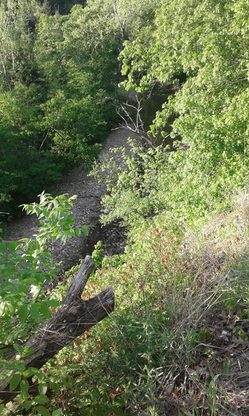 Columbine grow on the bluff overlooking Gans Creek.