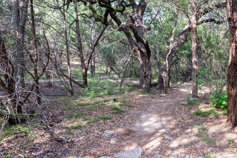 The Slaughter Creek Trail remains smooth and beautiful about 1/2 mile from the trailhead.