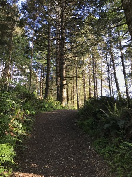 The College Cove Trail makes a beautiful traverse through the coastal forest.