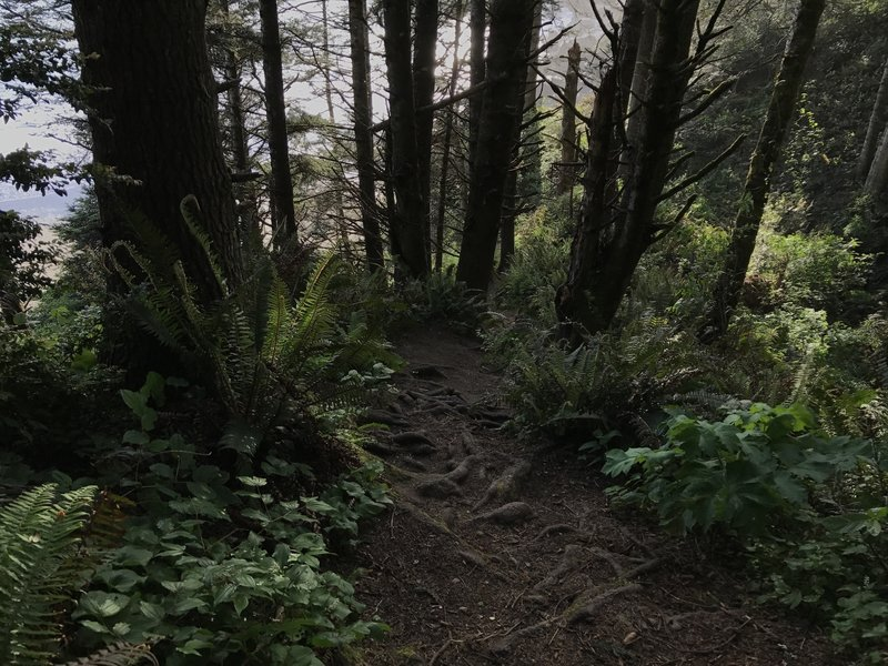The spur trail to College Cove Falls is a must if you're in the area.