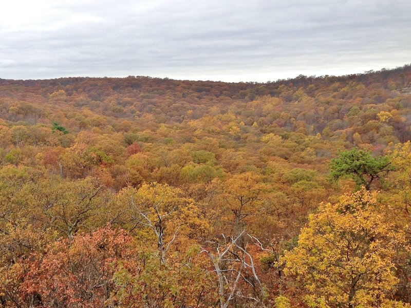 Enjoy vibrant autumn views on Norvin Green State Forest's Hewitt-Butler trail.
