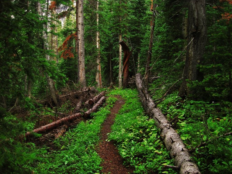 The trail draws back into another heavily wooded patch.
