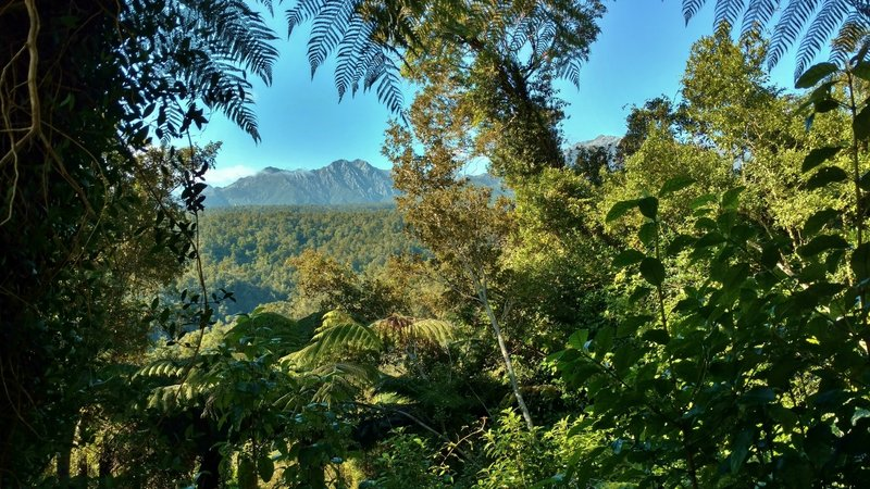 Enjoy a glimpse of the Tasman Mountains through the thick vegetation at the start of the Heaphy Track.