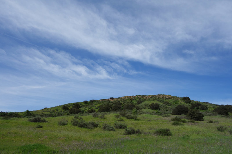 A verdant hillside provides a pretty view along Spring Canyon at Mission Trails Regional Park.