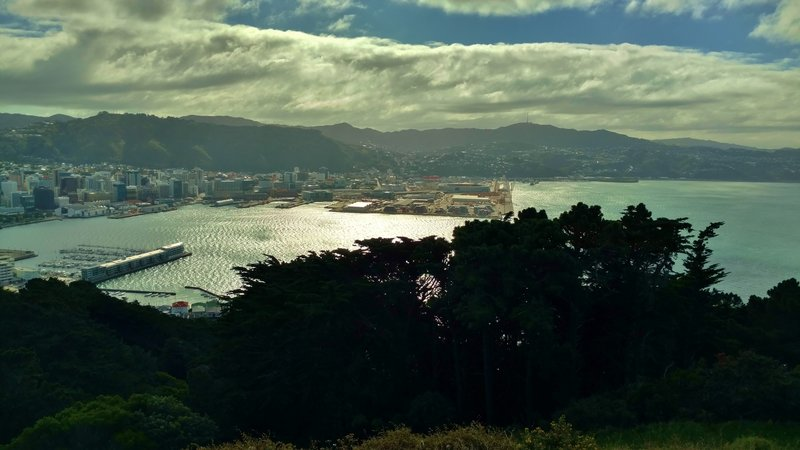 Wellington Harbor is stunning from Mt. Victoria Lookout.