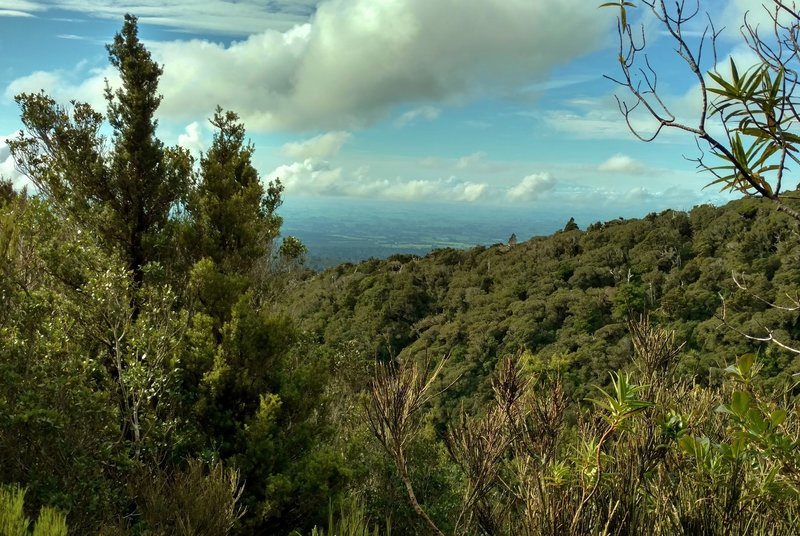 This is a glimpse of the flatlands that surround Mt. Taranaki, seen through the trees of the thickly forested Veronica Loop Track.
