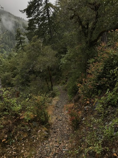 The Craigs Creek Trail is occasionally caught in a blanket of fog, further adding to its mystique.