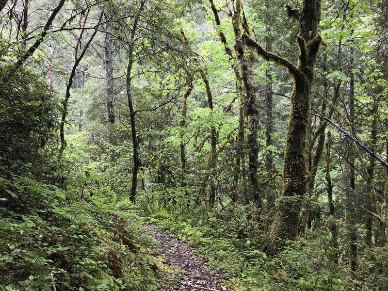 The Craigs Creek Trail takes you through gorgeous, almost mystical scenery.
