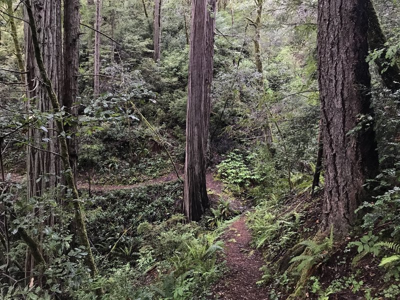 Craigs Creek Trail is a beautiful escape into the forest.