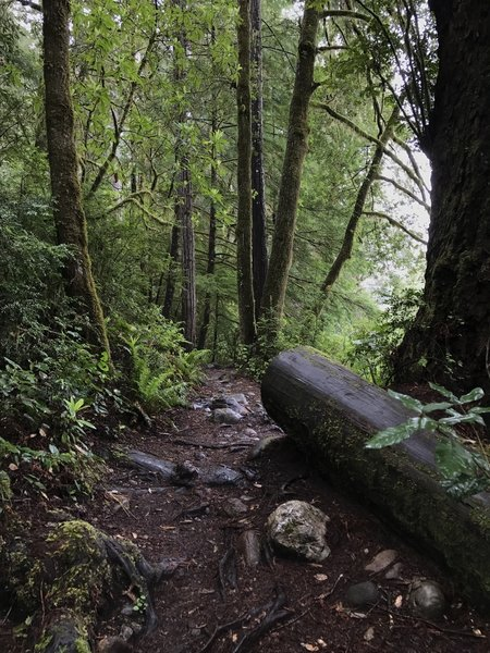 Roots and cobbles define the trail surface on the River Trail.