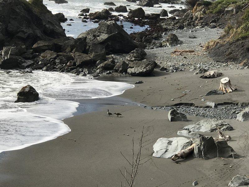 Geese enjoy the waves on Martin Creek Beach.