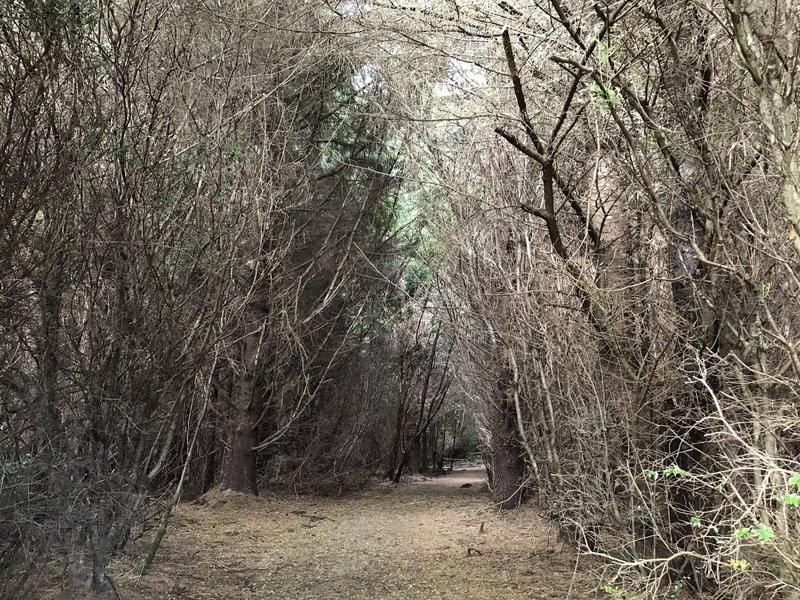 Elk Head Connector Trail traverses a long wooded corridor.