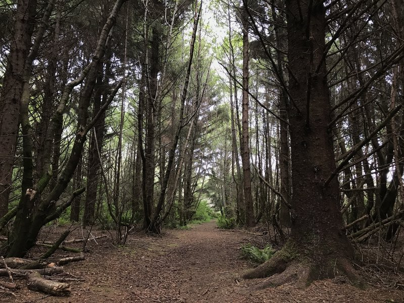 Elk Head Connector Trail is just as beautiful as the other area trails.