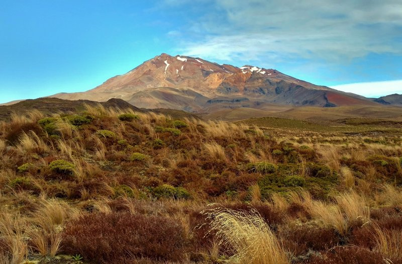 Mt. Ruapehu rises over the tussocks of the Tama Lakes Track.