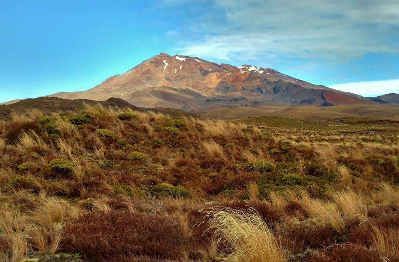Mt. Ruapehu rises over the tussocks of the Tama Lakes Track.