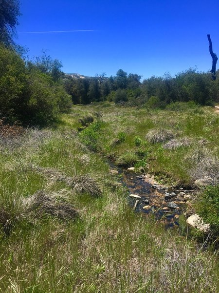 Descanso Creek is small yet beautiful.