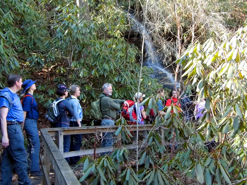 A group explores the rhododendrons along the Bartram Trail.