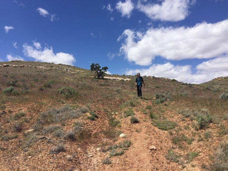 Open desert around the Cape Solitude Trail.