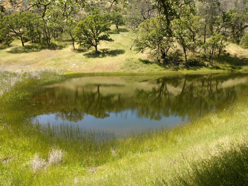 A small pond forms near the middle portion of the trail.