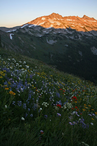 Goat Rocks doesn't disappoint when it comes to wildflowers and scenic views.