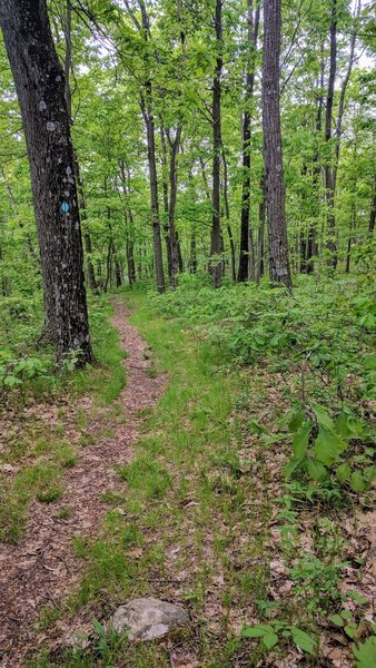 Some enjoyable singletrack can be found on the Highlands Trail in Mahlon Dickerson Reservation.