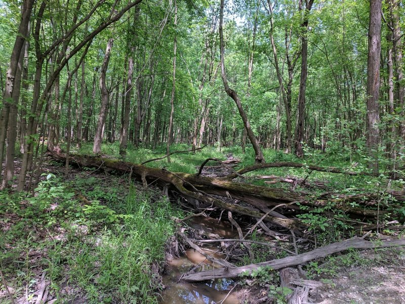 A small creek flows along the Buttonbush Trail.
