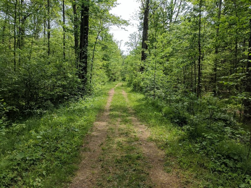The Buttonbush Trail travels through gorgeous, verdant forests.