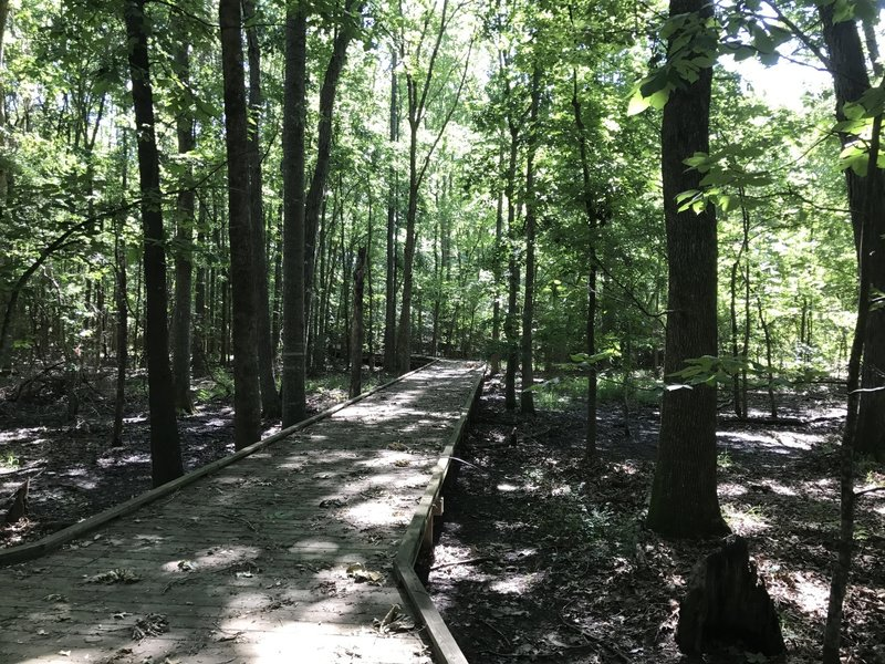 A boardwalk guides visitors over a low-lying area on the Upland Nature Trail.