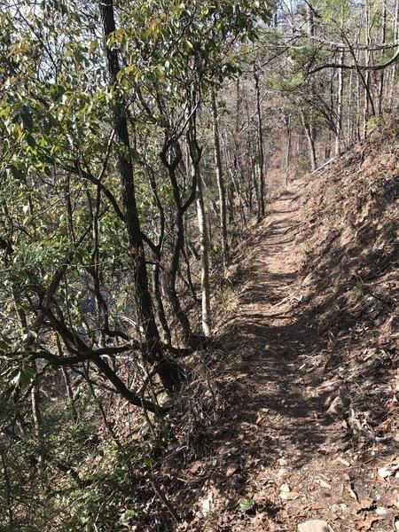 The Deer Rub Trail narrows along a cliff above Chewacla Creek.