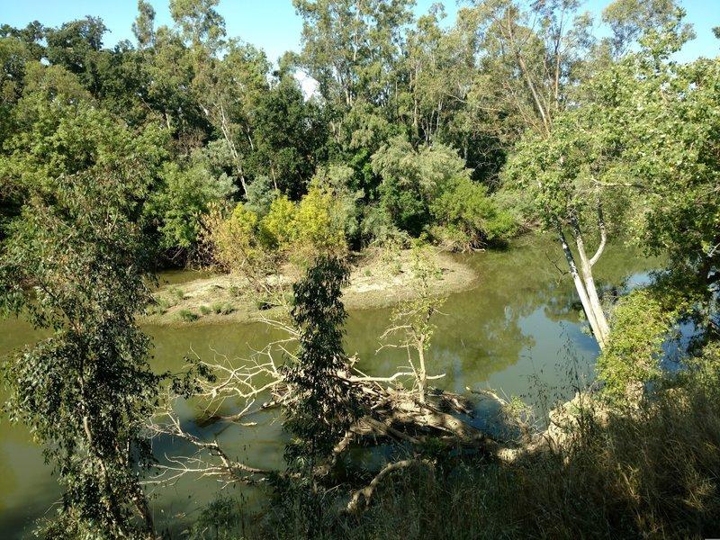 Putah Creek can often have log jams.