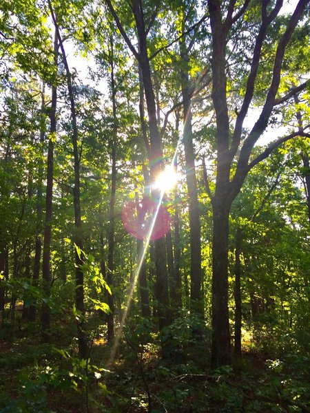 Morning sunshine greets the early risers on trail.