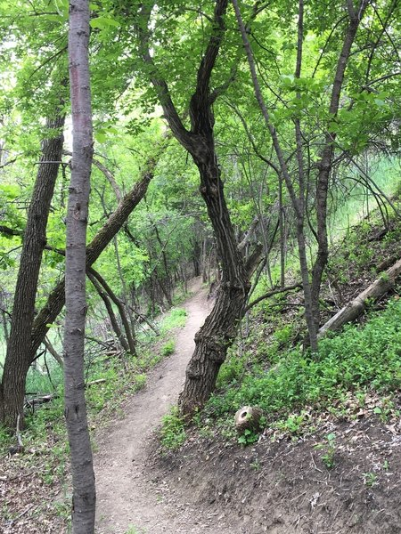 The trail heads through the forest on the west side of the campground.