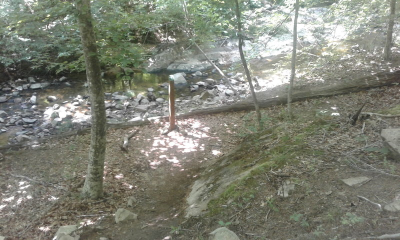 The very bottom of trail along Ledge Creek is steep and forested. The slopes are dominated by native oaks, hickories, beeches, and tulip poplars.