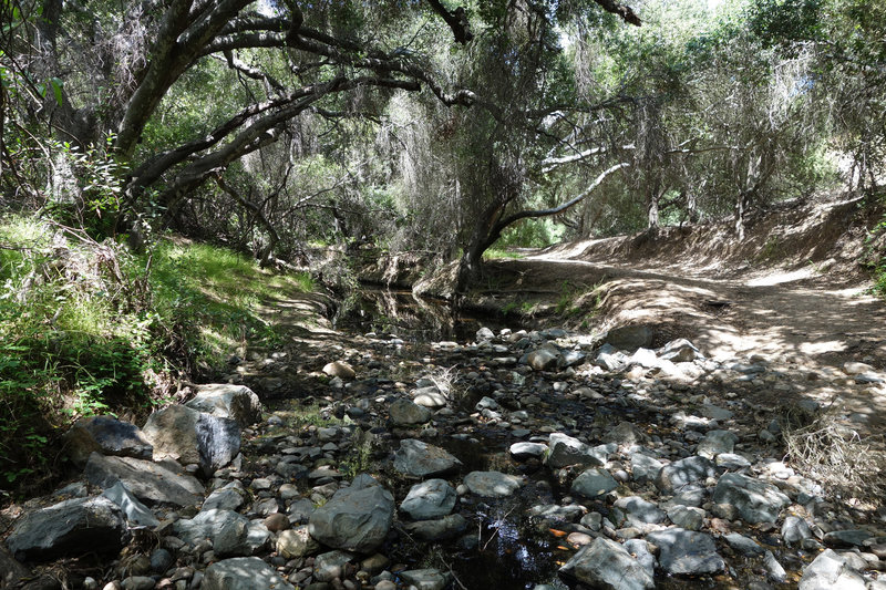 The Tecolote Canyon Trail follows a tree-lined stream.