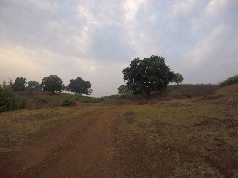 Mango trees dot the landscape along the way.