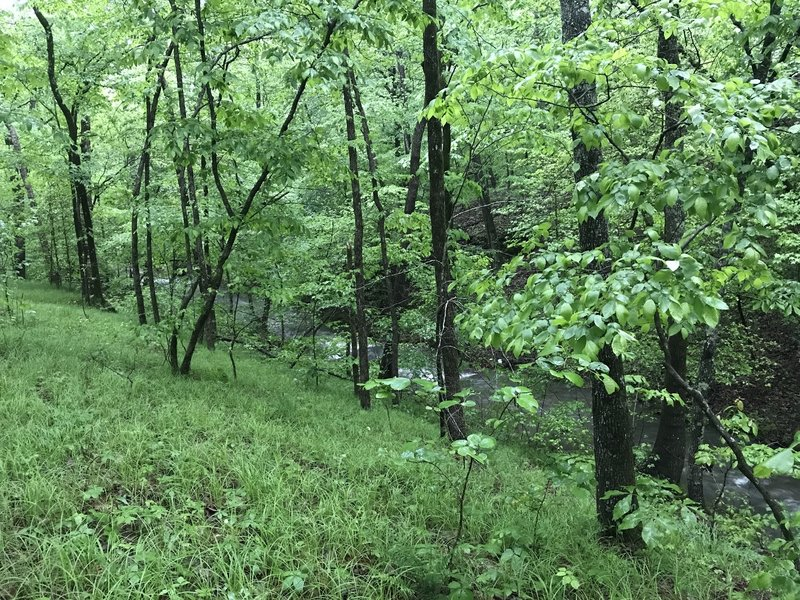 From the Caney Creek Trail, make your way across the creek from this spot to find a great area to camp.