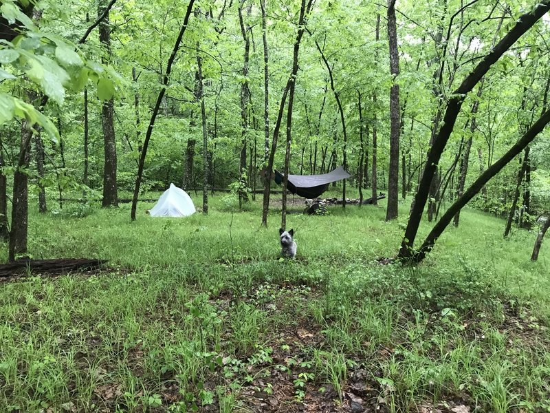 This is the campsite across the creek from the Caney Creek Trail.