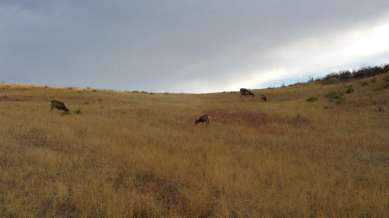 Mule deer graze along the back side of the bluffs.