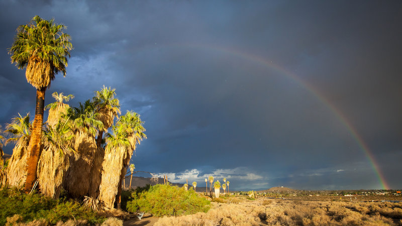 A distant rainbow frames palms at the Oasis of Mara. Photo credit: NPS/Evan Heck.