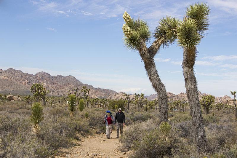 Park visitors head up the Ryan Ranch Trail. Photo credit: NPS/Hannah Schwalbe.