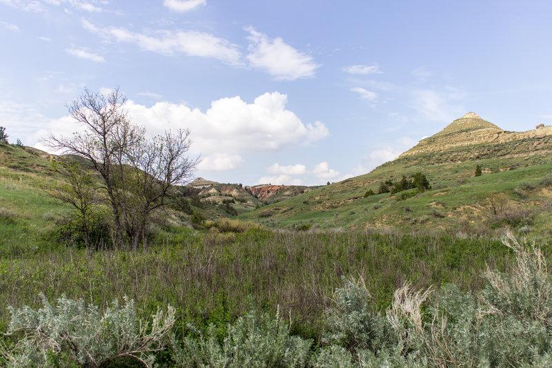 Heading into the Jones Creek Trail, enjoy this scenic view.