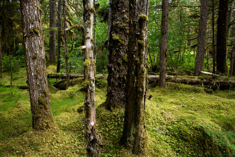 Thick carpets of moss blanket the forest floor off the Forest Trail.