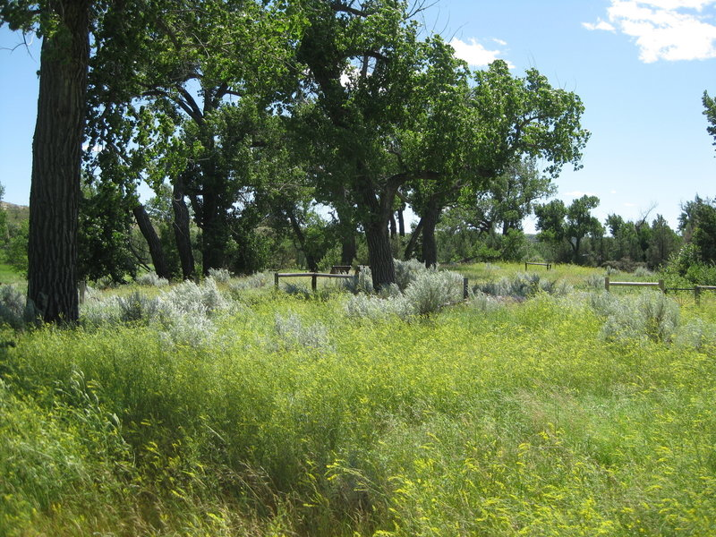 Grasses and sage grow near the site of Theodore Roosevelt's ranch house. Photo credit: NPS/Patti Schaefer.