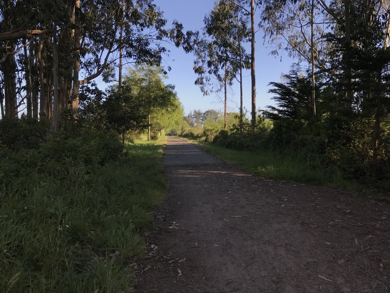 Hammond Trail near Highway 101 north of McKinleyville.
