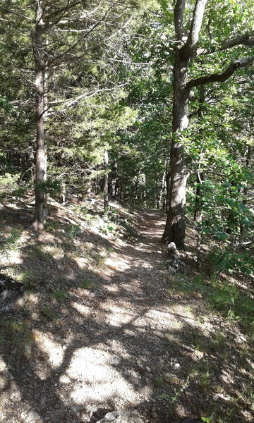 At this point, the singletrack leads away from the bluff.