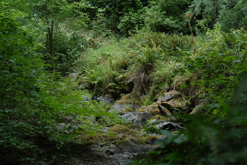 Dense vegetation grows along Little River on the Fern Canyon Trail.