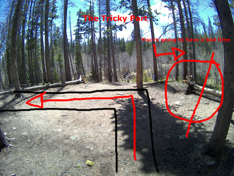 This is the section where most people get confused and go the wrong way. It happens about 5 minutes into the trail. Go LEFT here! If you go right, you end up bushwhacking and following a faint trail that disappears.