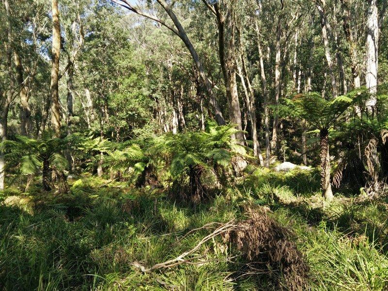 Ferns and dense underbrush abound along Federal Pass.