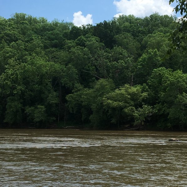 If you look closely, you can just make out an eagle's nest across the Yadkin River.