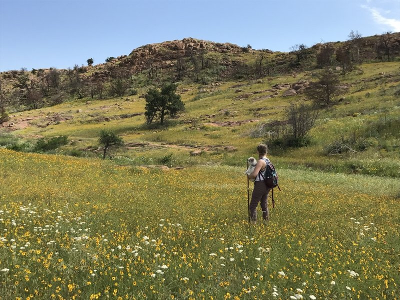 The Bison Trail offers some incredible wildflower meadows in the spring.